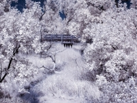 Bridge - Ir