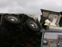 Overturned Cattle Tractortrailer Rig