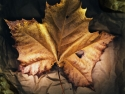Fallen Leaf On Paper Bag