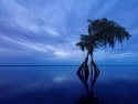 Blue Hour At Blue Cypress Lake