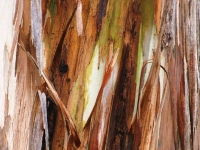 Tree Bark    Fine Art