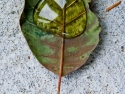 A Drop On An Arid Leaf