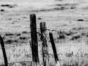 Black & White Fence