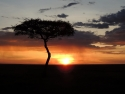 Sunset In The Masai Mara
