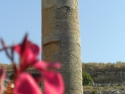 Flowers And Column Enriched In Greek Cyrene