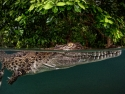 Crocodile Bower