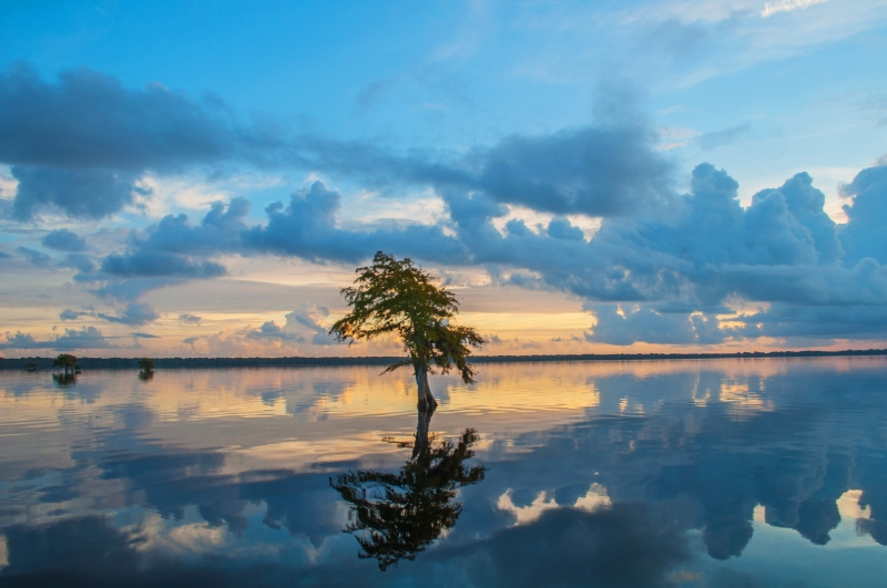 Blue Cypress Sunrise