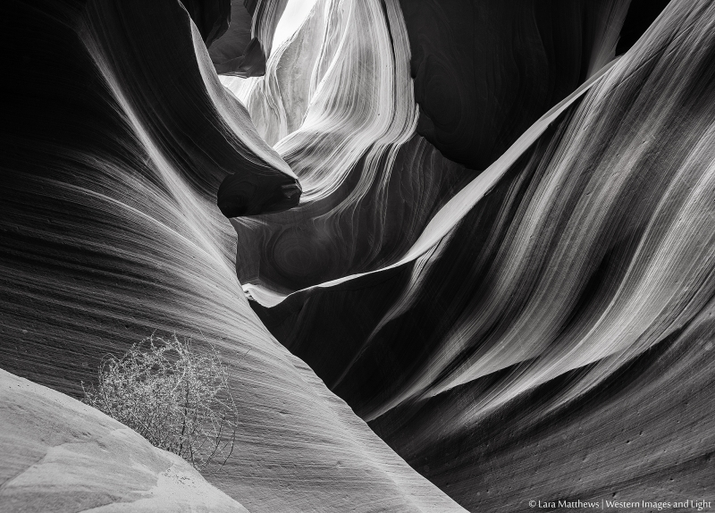 Light In The Canyon