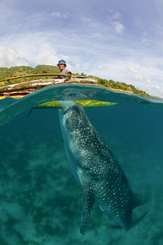 Whale Shark And Fisherman