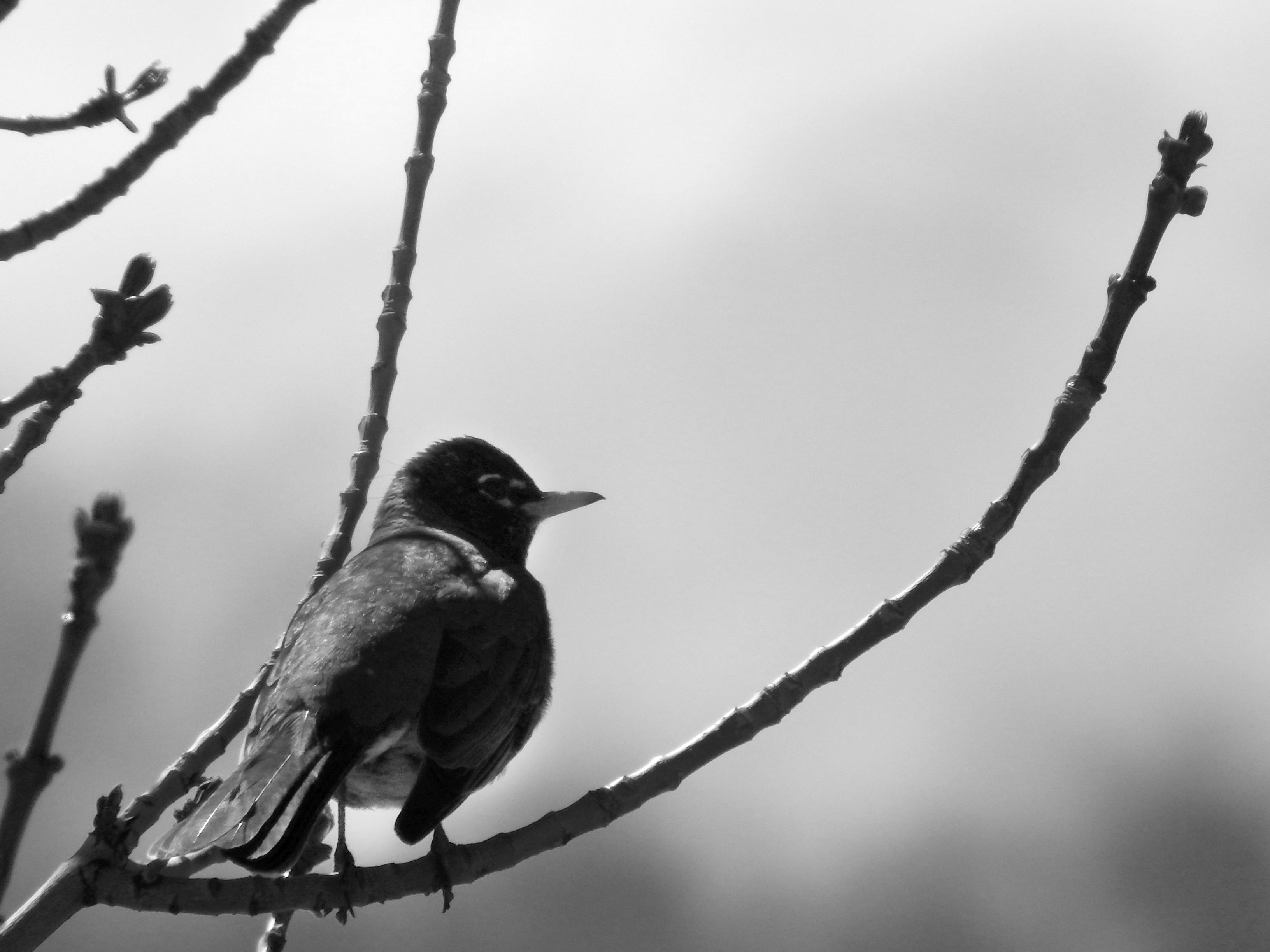 bird_resting_on_branch