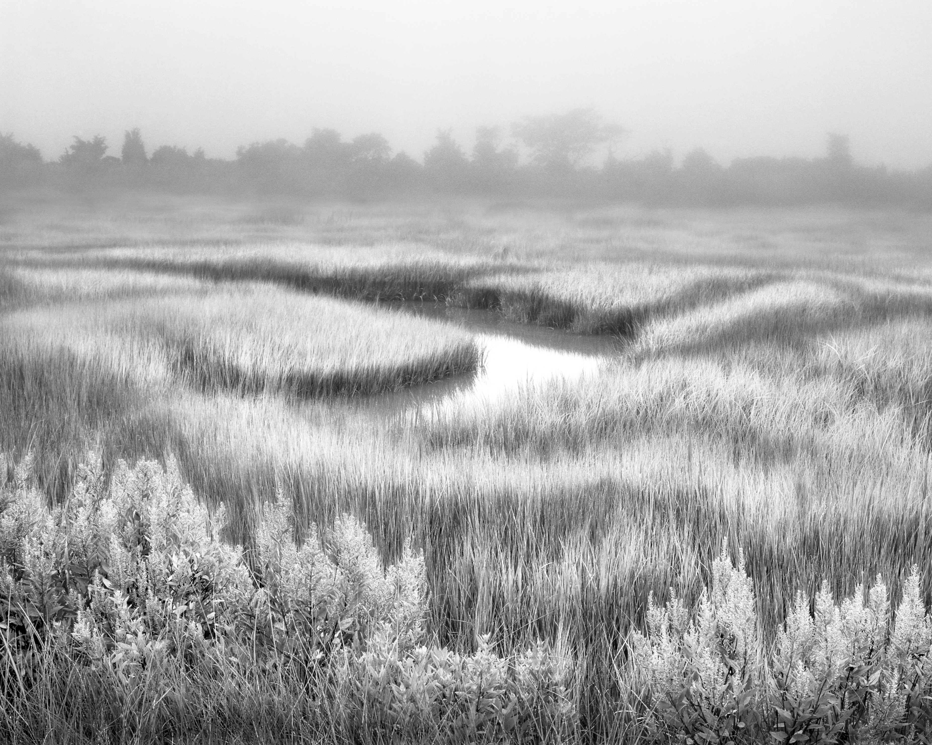 Foggy Marsh B+W 32K