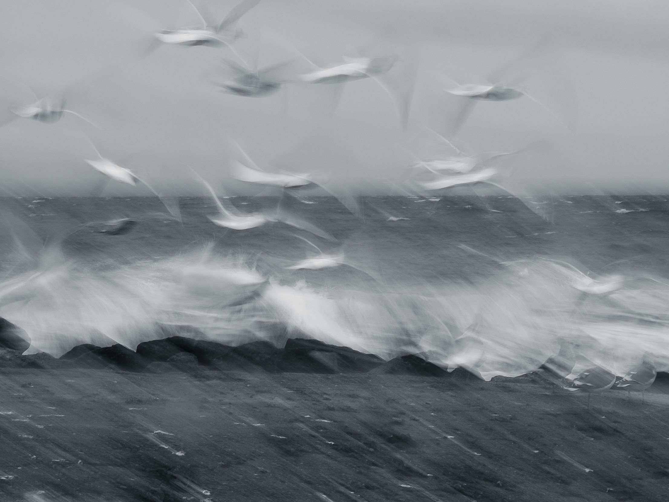 Gulls in a Storm BW
