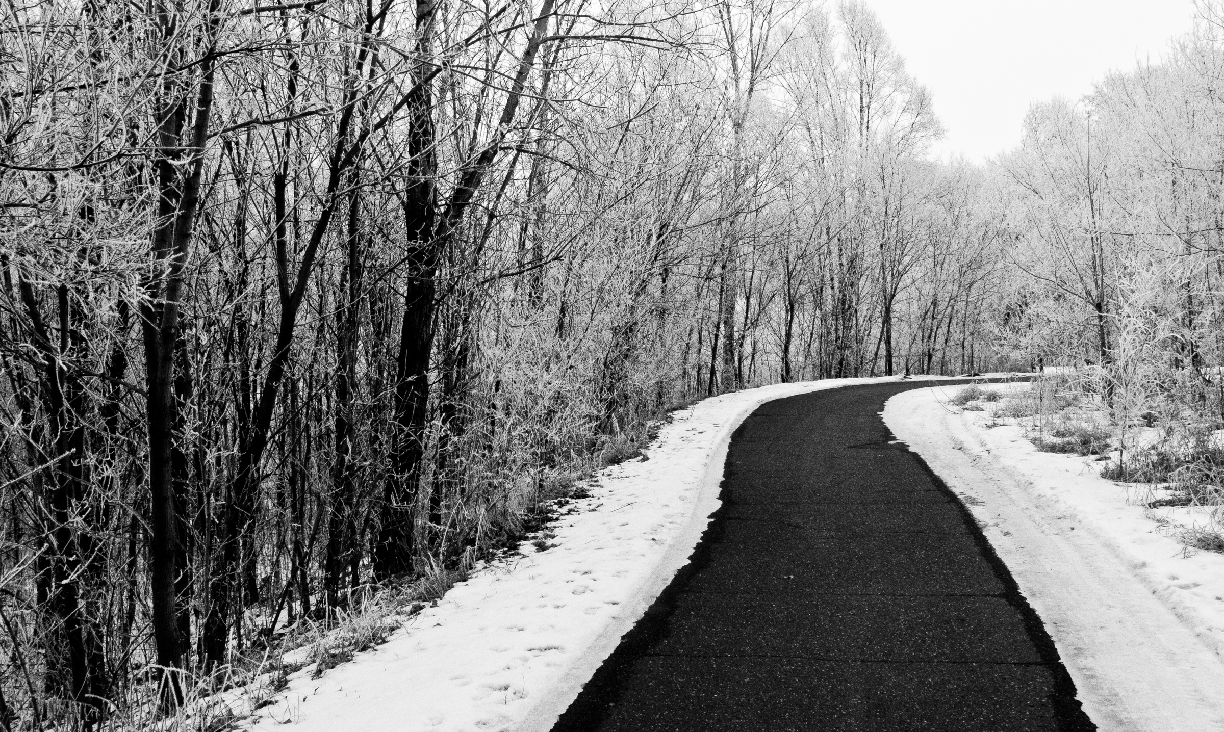 Hoarfrost Covered Trail