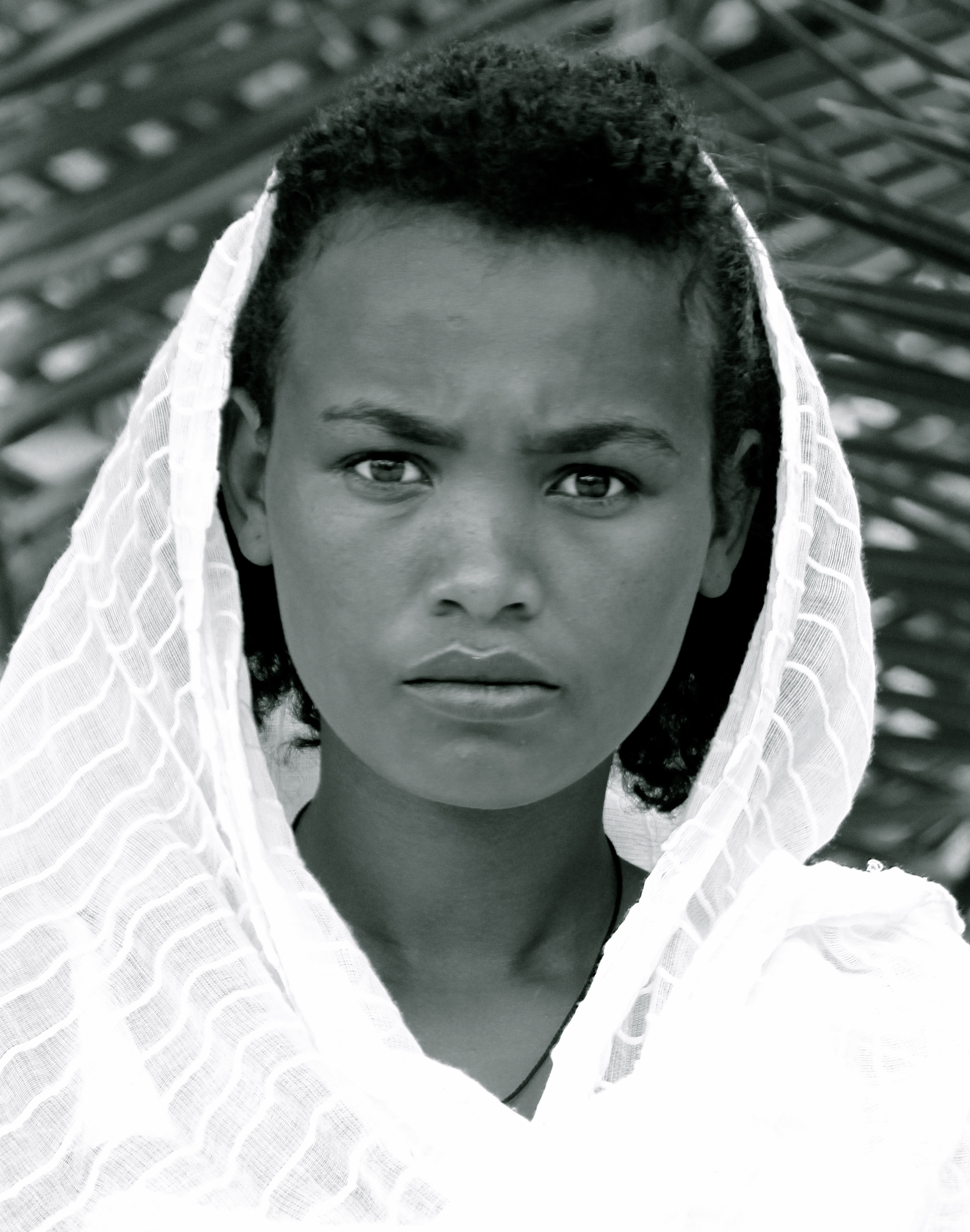Abbysinian Beauty, Northern Ethiopia