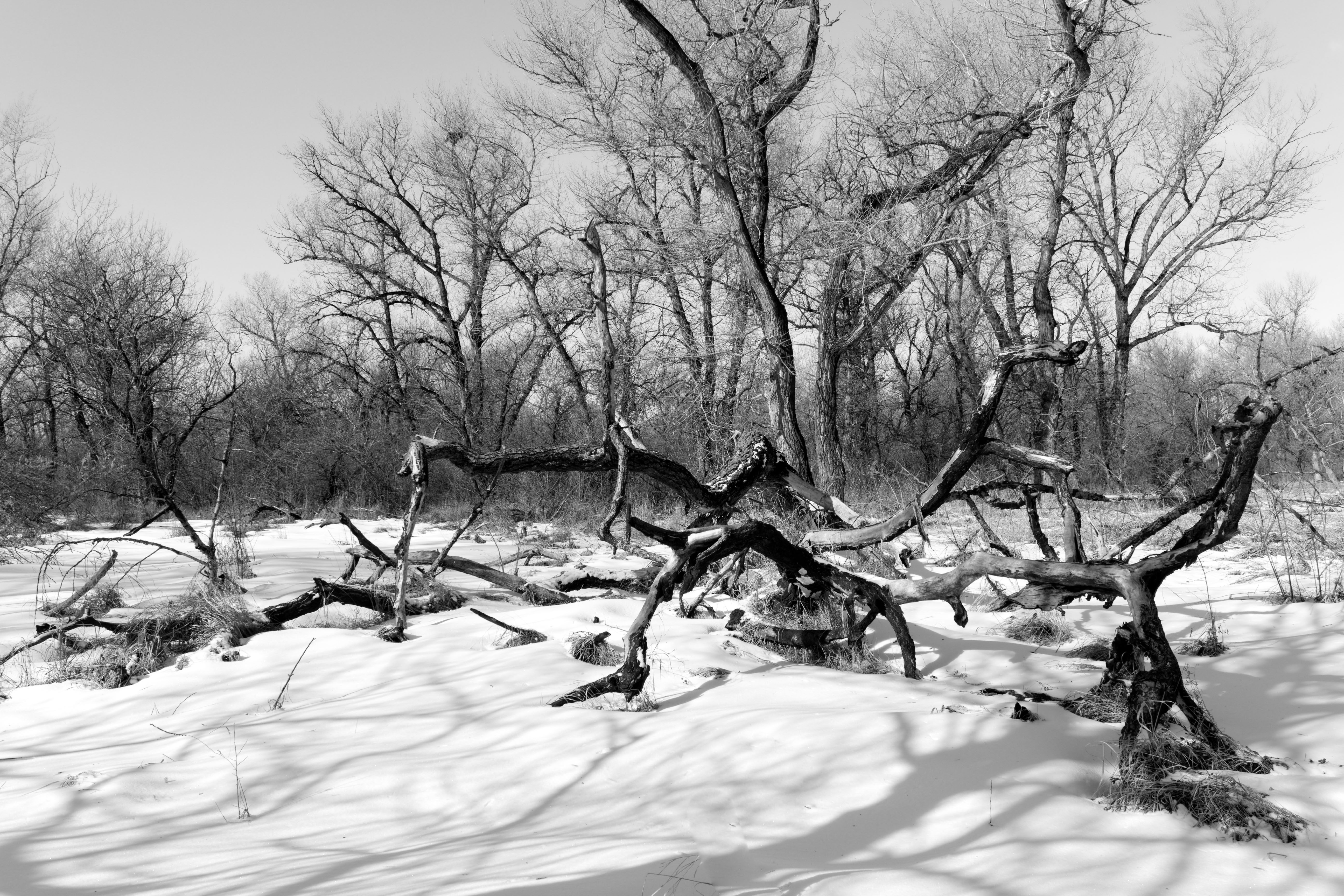 Winter forest after a storm