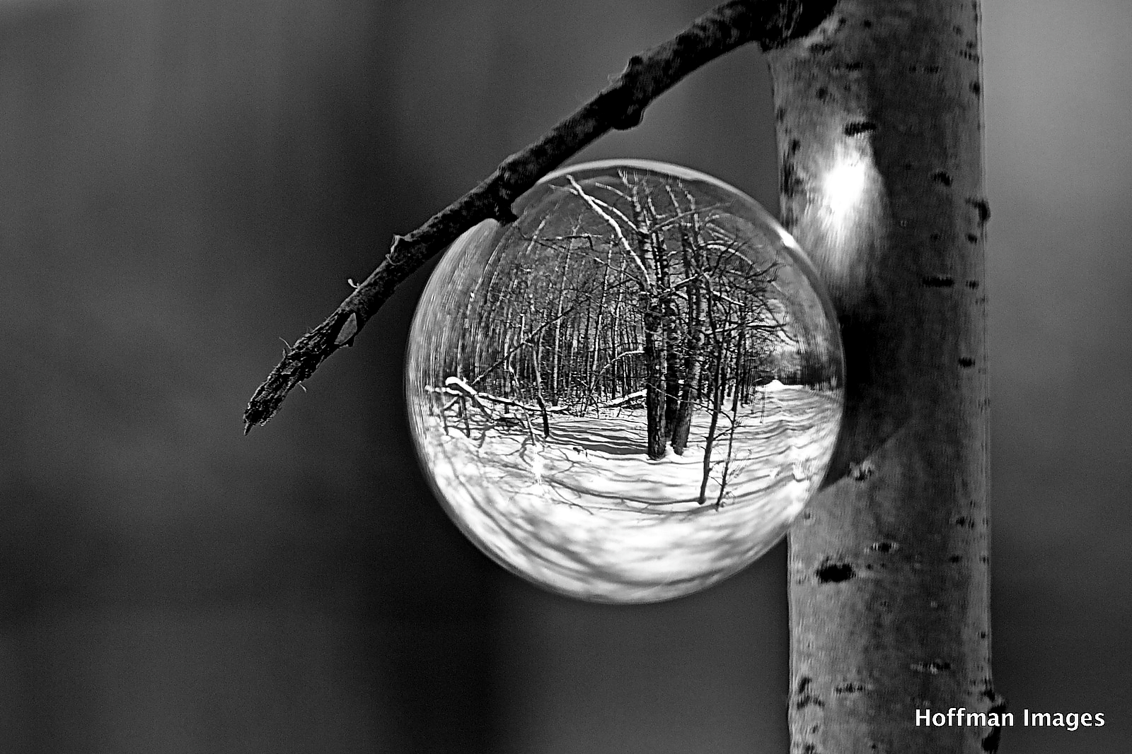 Forest Refraction