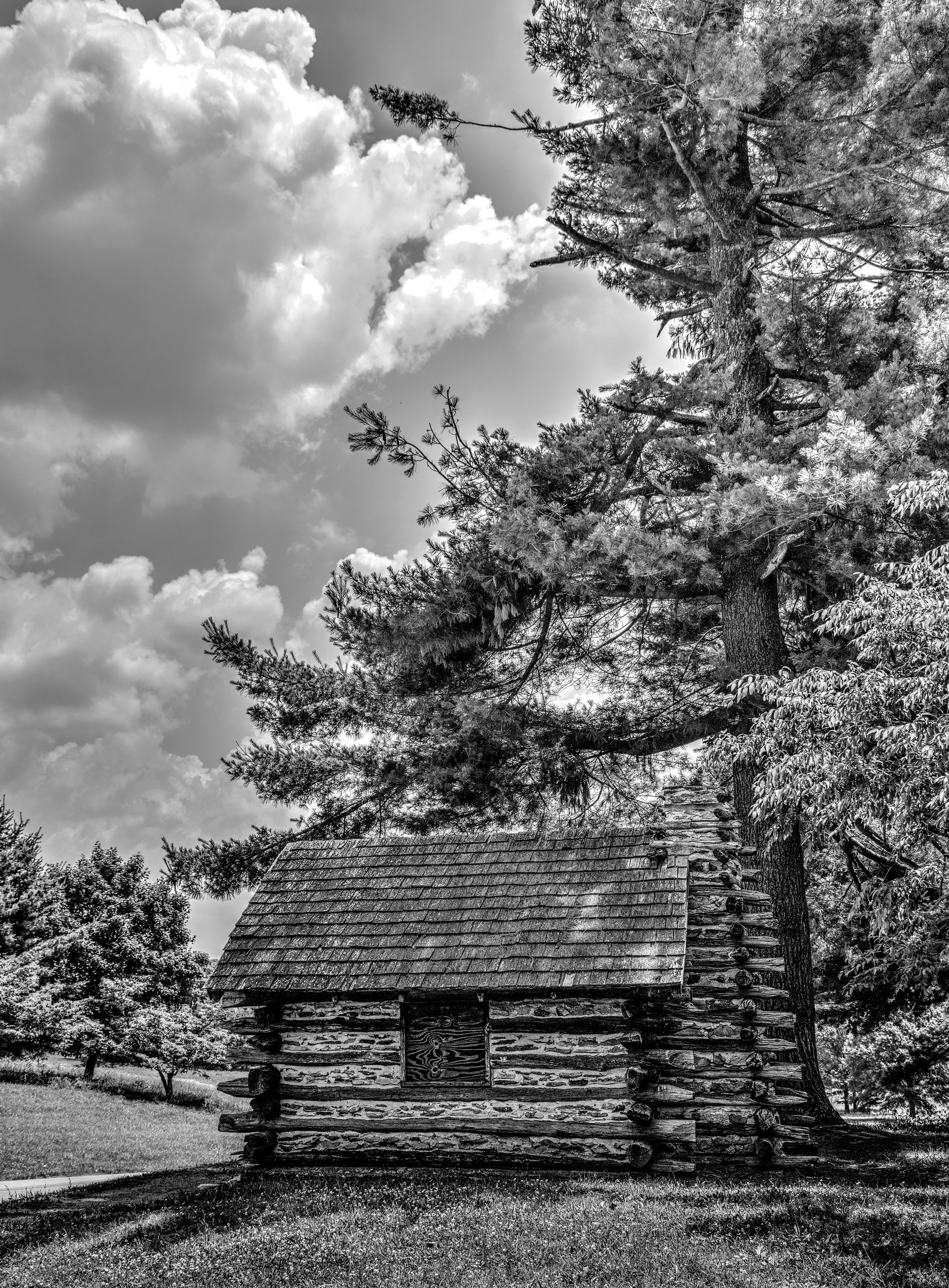 rsz_2cabin_under_tree_01