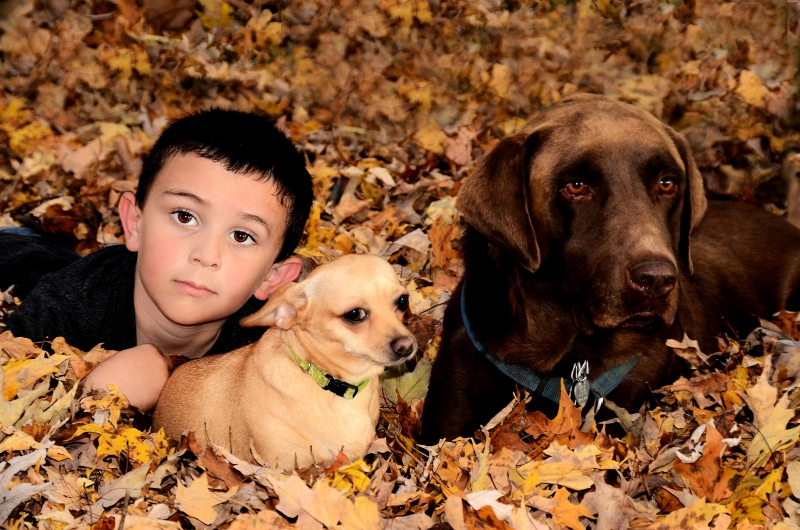 A Boy And His Dogs