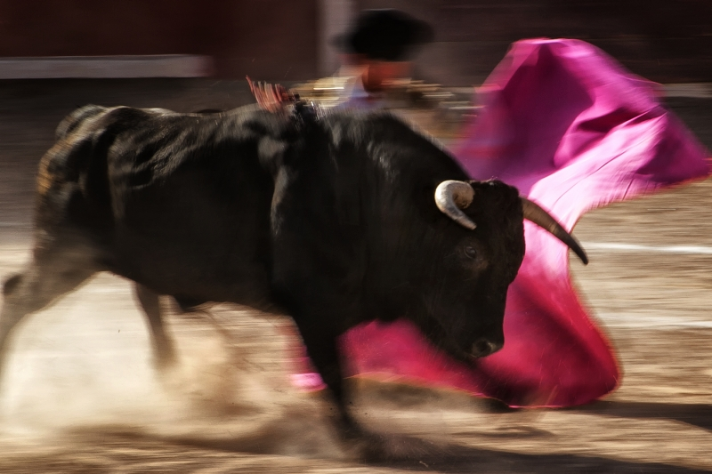 Bull Fight Blur
