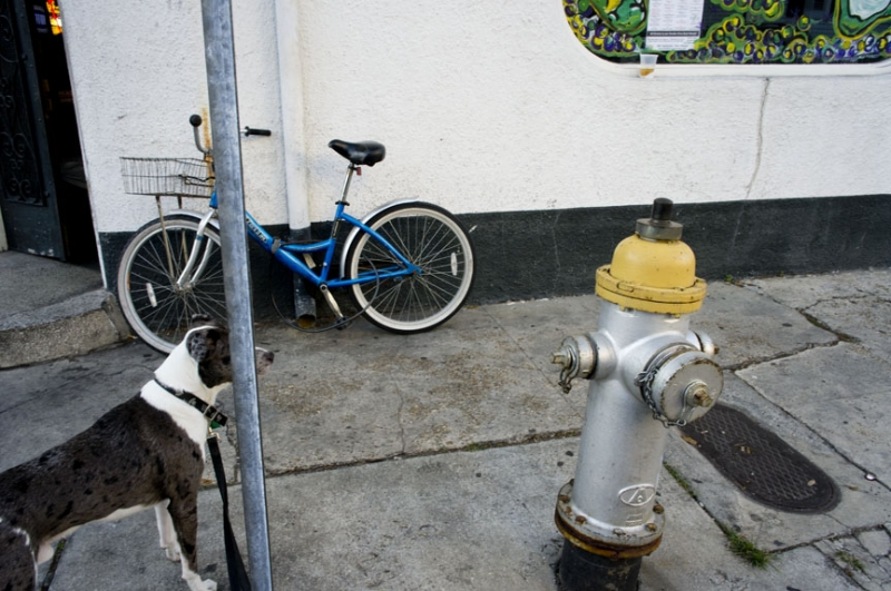 Dog, Hydrant, Bike And Bar.