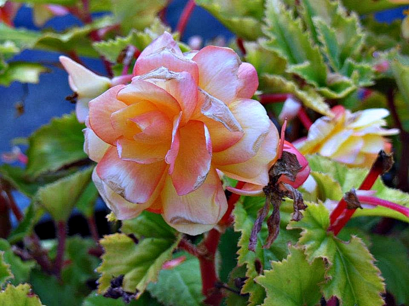 Flower With Multi-Color
