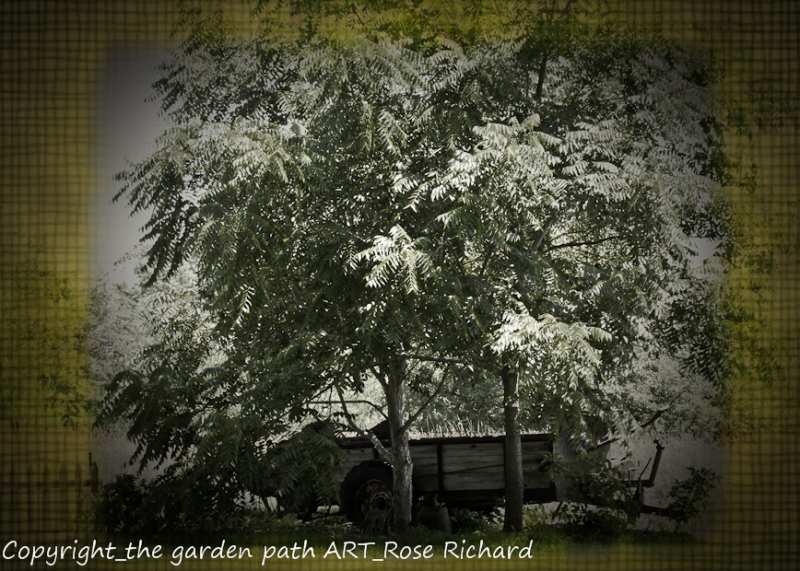 The Garden Path Art