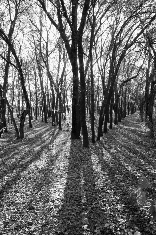 The Light And Shadows In The Forest