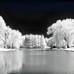 Black And White World