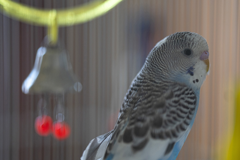 Slideshow: Test Photos for Review of Sony FE 135mm F1.8 GM Lens--Bird in Cage