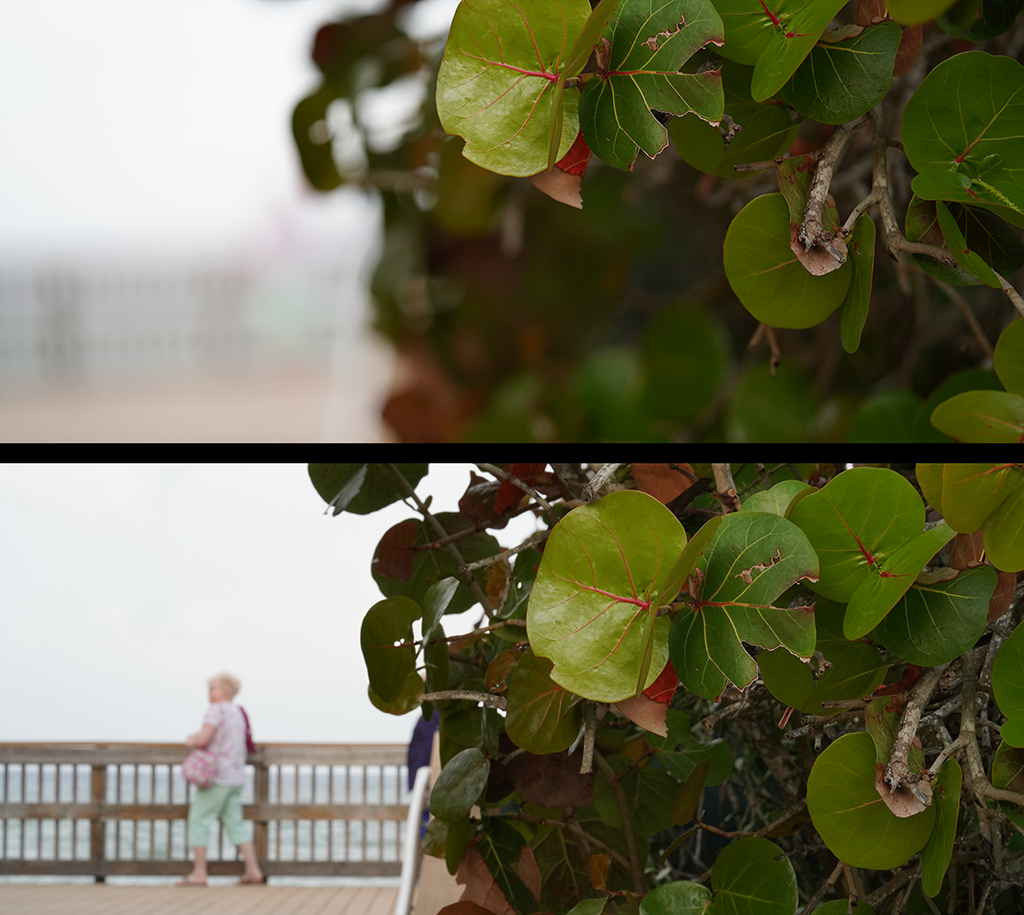 Slideshow: Test Photos for Review of Sony FE 135mm F1.8 GM Lens--Outdoors Quick Focus