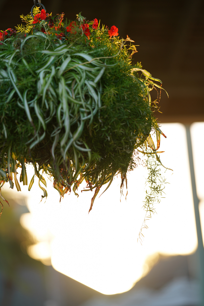 Slideshow: Test Photos for Review of Sony FE 135mm F1.8 GM Lens--Hanging Plant